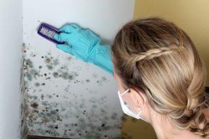 Assainir une pièce humide: Enlever les traces de moisissures sur les murs