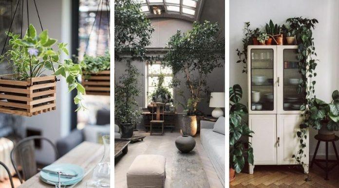 20 Plantes d'intérieur étonnantes pour votre maison