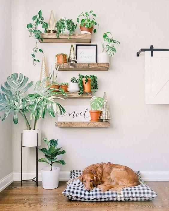 Ajoutez de la verdure au salon avec des plantes murales
