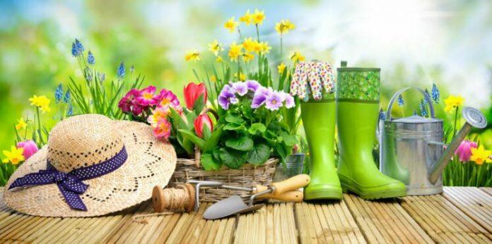 Top 10 des blogs de jardinage pour les amateurs
