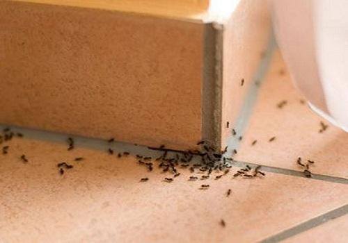 La pelure de concombre empêchera les fourmis d'envahir votre maison