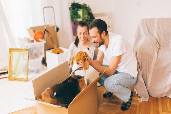 Préparez vos animaux pour un déménagement