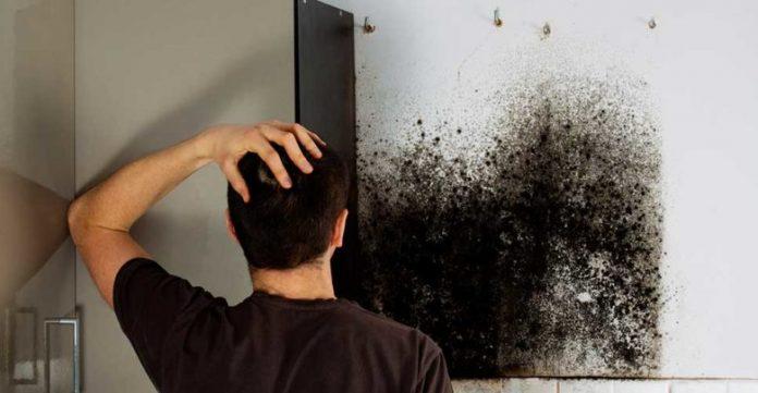 5 Premiers signes de fuites de tuyaux derrière les murs