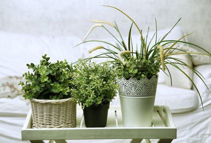 15 plantes qui vous aideront à tomber et à rester endormi toute la nuit